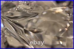 Stunning 2004 Swarovski Crystal 9.5 Bull 628 483 (Limited Ed) 5865/10000 with COA