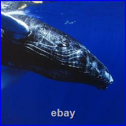 Wyland Calf Limited Edition Photograph Signed/Numbered Sea Whale COA